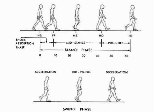 Figure the gait cycle showing events in sta o p