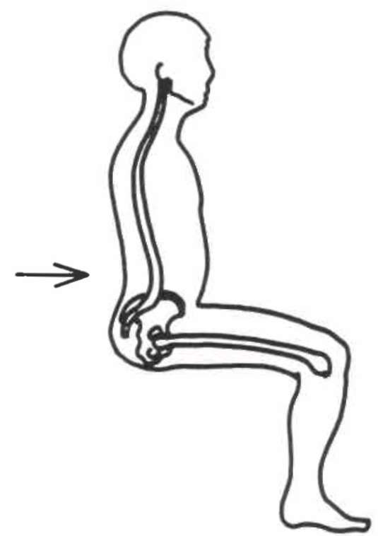 Fig 3 Lumbar Spine Being Used As A Lever By Op Digital Resource